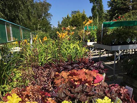 billig planteskole nordsjælland